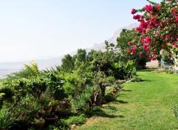 День отдыха на Мертвом море SPA Эйн Геди-82