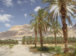 Мертвое Море, заповедник Эйн Геди-93